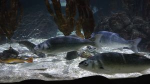Sealife Speyer (2014)